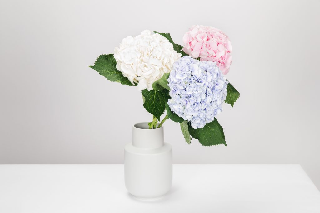 Nice flowers in white background, Home Staging living room