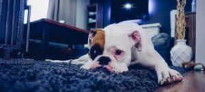 Woonkamer van een huurwoning in blauwe tinten met een hond