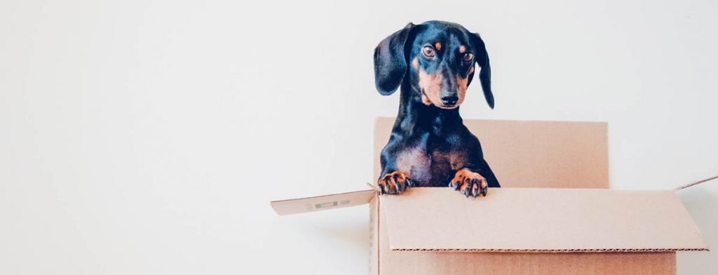 A small dog in a box sticking his head out, moving in 1 2 3 here is our helpful checklist.