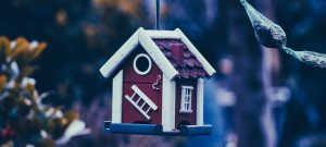 Cute little bird house hanging from a tree, choosing the best mortgage loan for you.