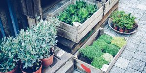 Group of small green plants for sale, extra costs when buying a house.