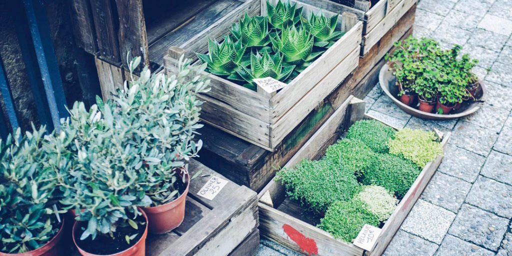 Differentes sortes de plantes pour la maison