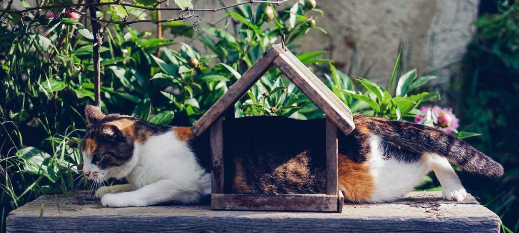 Huiskat in de tuin van een woning
