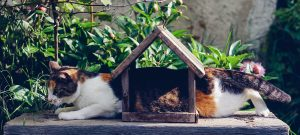 Silly cat stuck in a wooden home ment for birds, renting with pets is it a allowed.