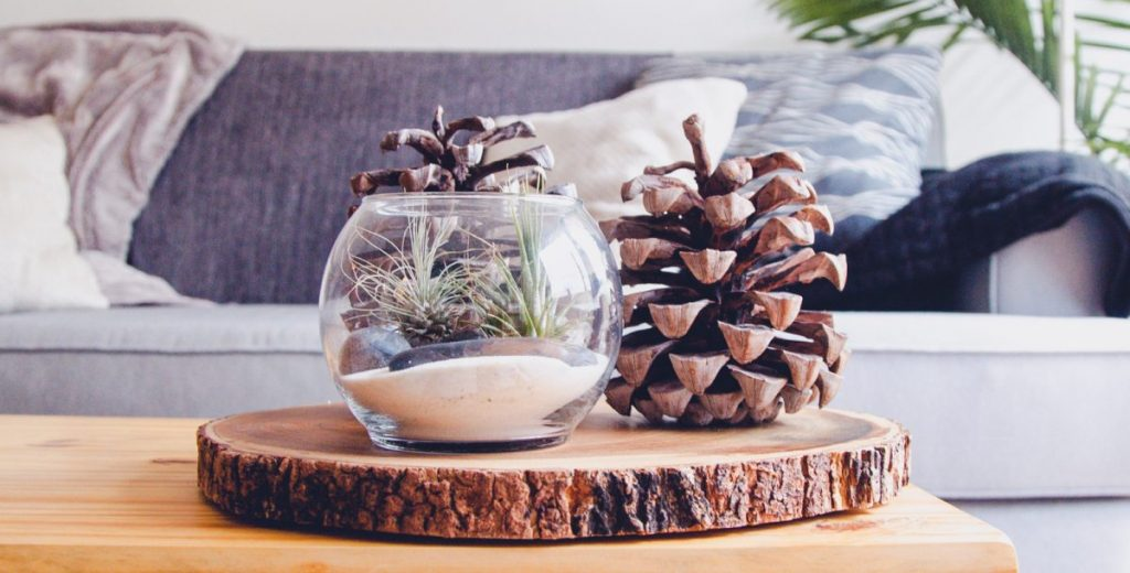 pine cone on a wooden table