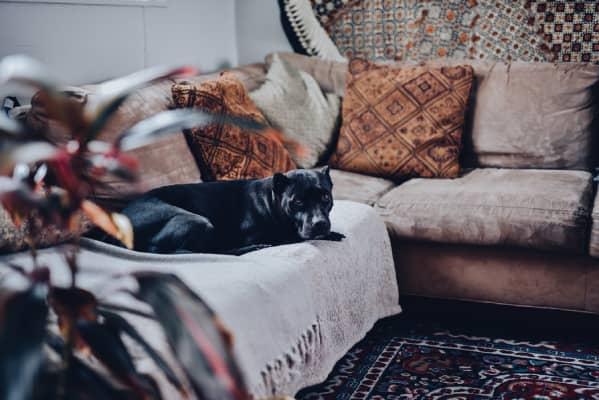 Un chien sur un canapé