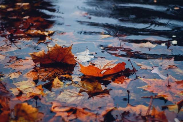 Bladeren in het water
